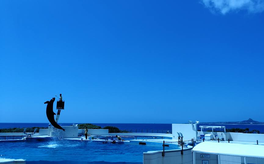 Dolphin Show in Okinawa Churaumi Aquarium