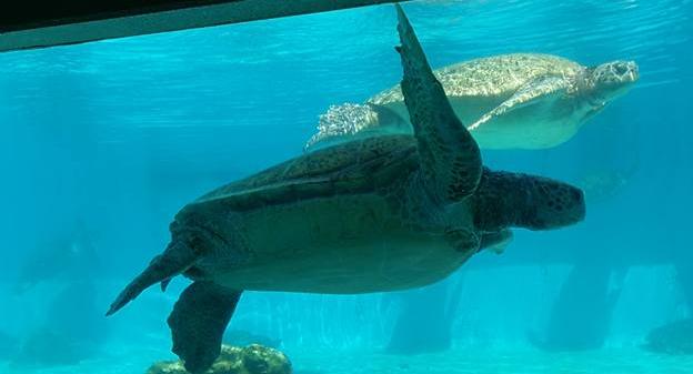 Turtle in Okinawa