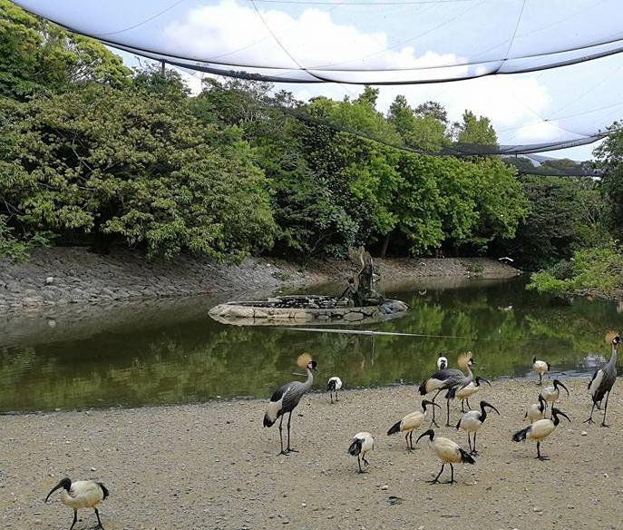 animals in Neo Park Okinawa