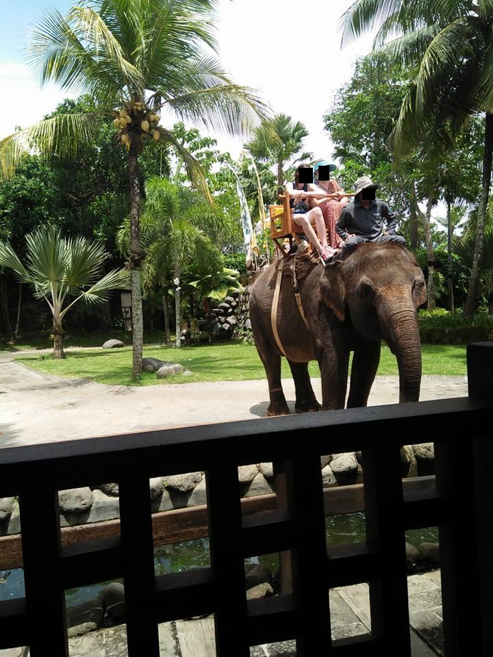 Elephant Bali Zoo Indonesia