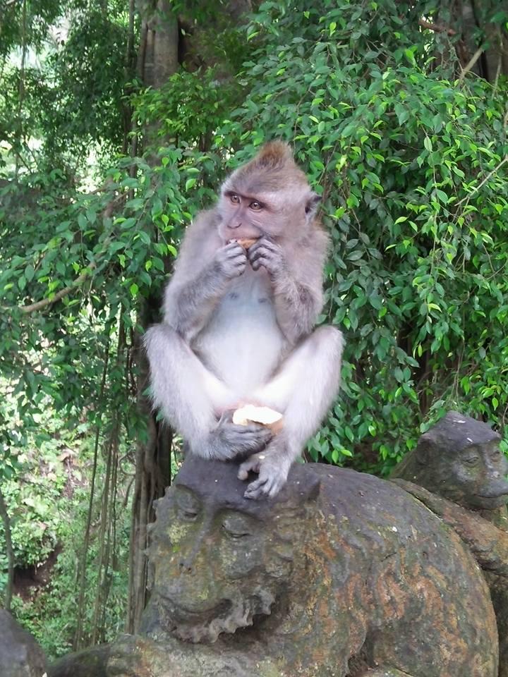 Monkey At Bali Zoo Indonesia