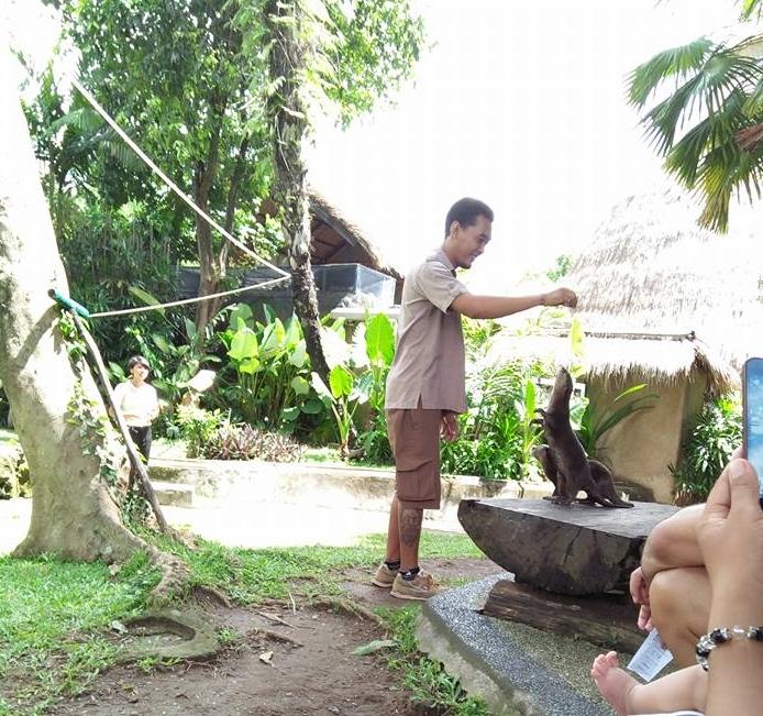 Animals of Bali Indonesia