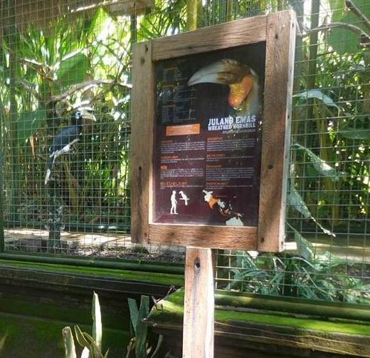 Bird from Bali Zoo Indonesia