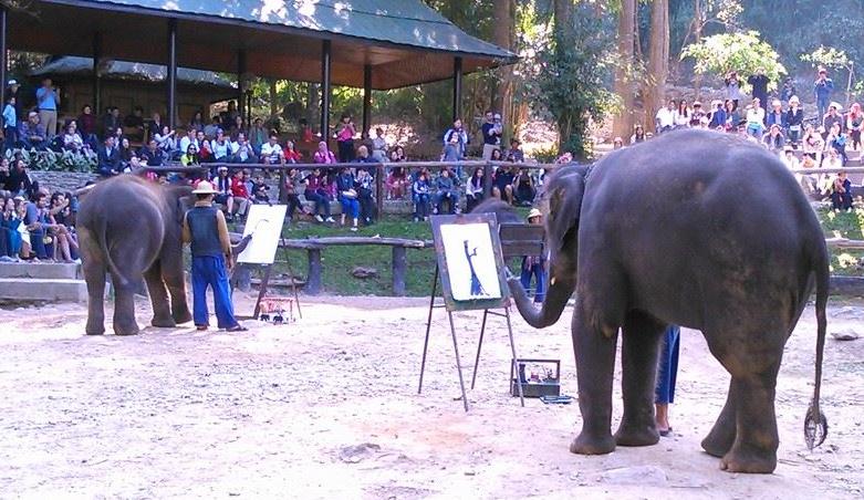 Elephants painting at Maesa Elephant Camp.