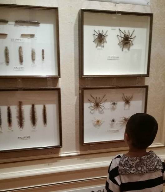 Preserved spider and scorpion from Huis Ten Bosch