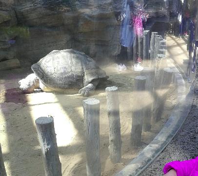 Giant Turtle of Ueno Zoo Japan