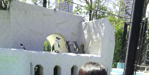 Penguins from Ueno Zoo Japan