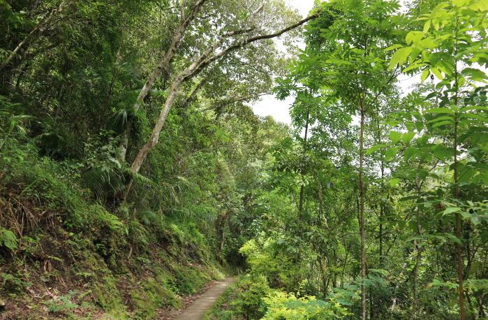 The way to Batad Rice Terraces