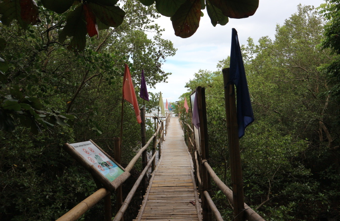 The path of Mangrove site.
