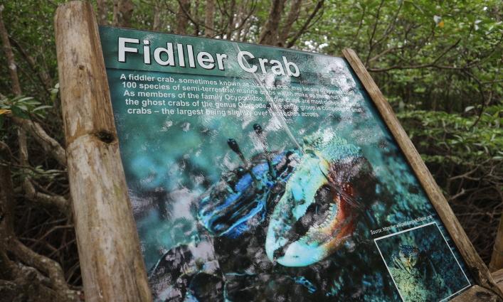 The fiddler crab.