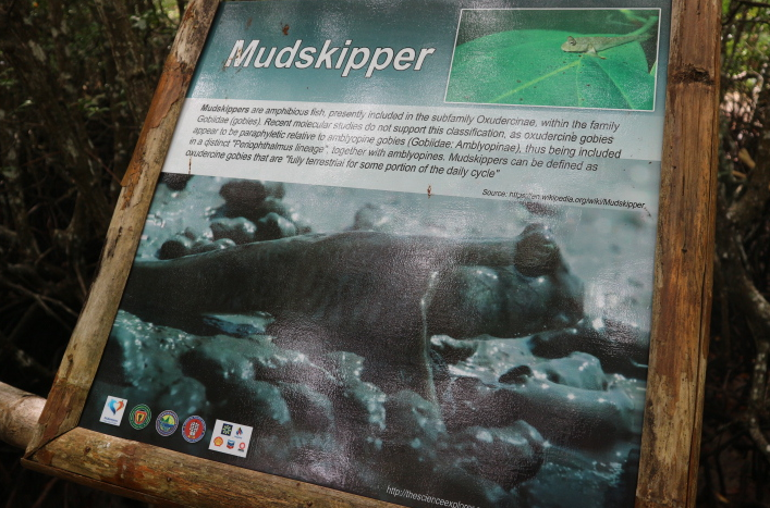 The mudskipper.