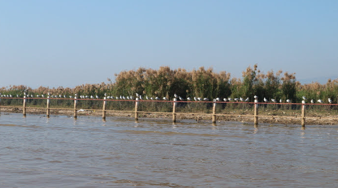 The Birds Preservation Area Myanmar, Inle Lake.