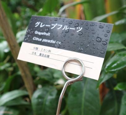 Botanical Garden Niigata Plant Labeled.