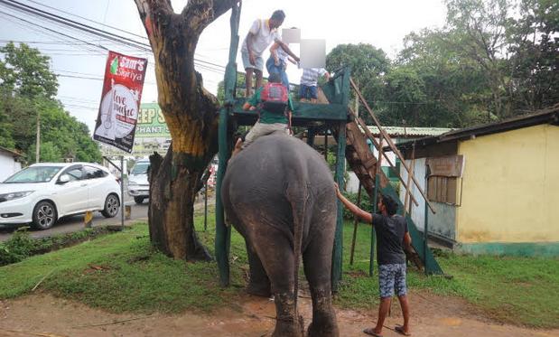 Elephant ride at Dambulla Sri Lanka.
