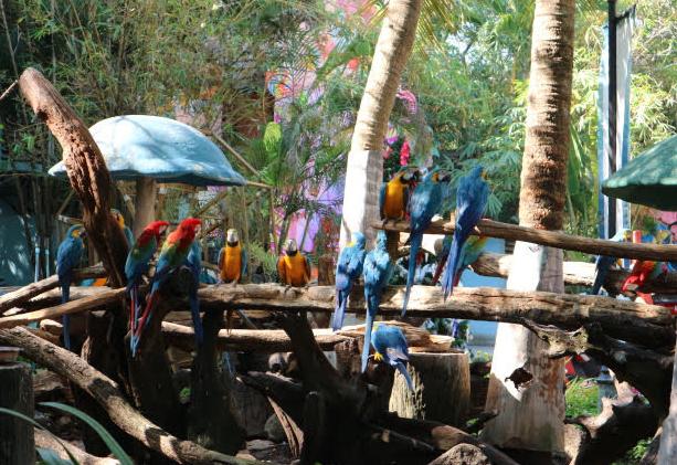 The talking parrots of Safari World Thailand.