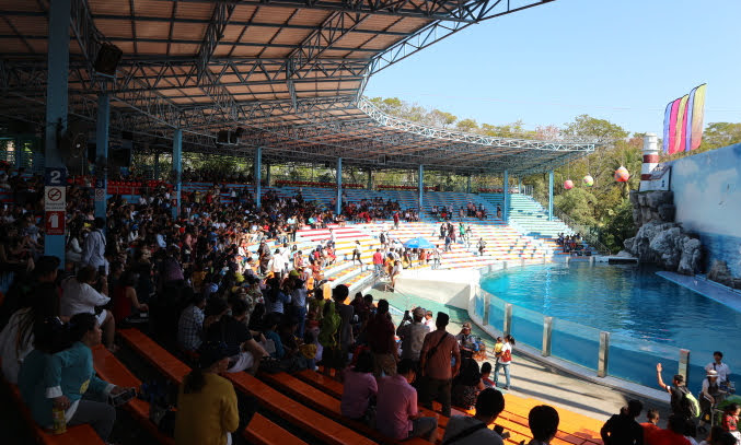 The dolphin Show of Safari Thailand.