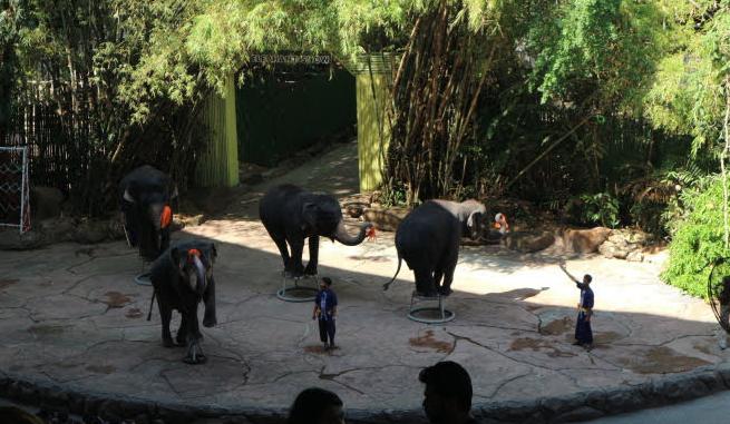 The elephant show of Safari Thailand.