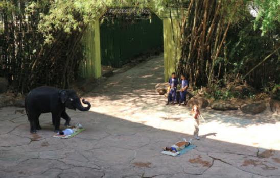 Two volunteers for the elephant show of Bangkok Thailand, Safari World.