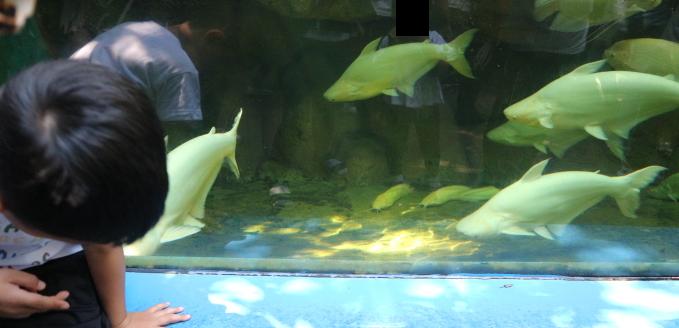 The fish of Safari world Thailand.