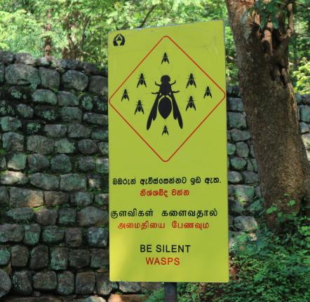 Warning on the wasps at Sigiriya rock.