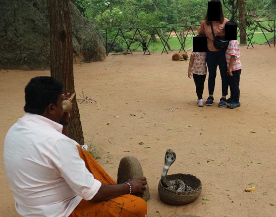 The python show at Sigiriya Rock.