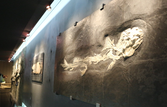 The fossils at the basement of the museum.