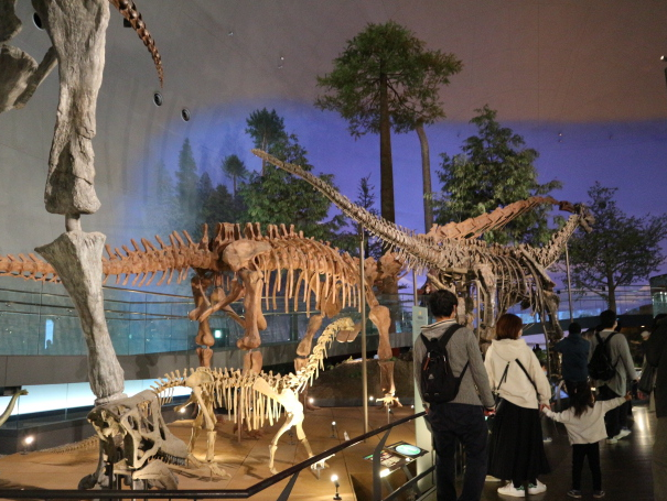 The anatomy of the dinosaur at the museum.