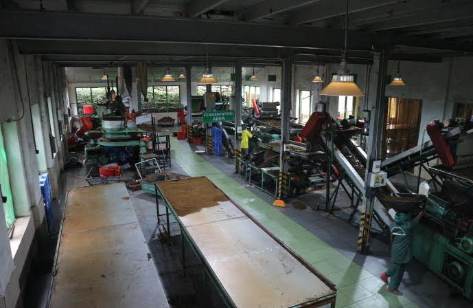 The grinding department of Damro Tea Factory.