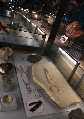 Marine fossils from the museum.