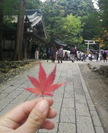 The autumn leaf.