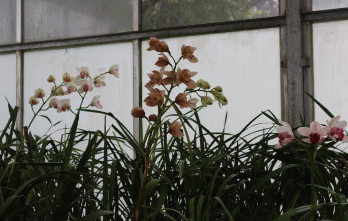 Orchids of The Hakgala Botanical Garden.