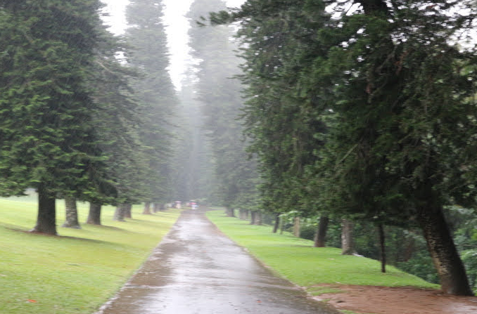 Tall trees surrounding the Peradeniya Royal Botanic Garden.