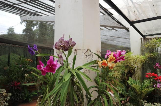 Orchids we saw at Peradeniya Royal Botanic Garden.