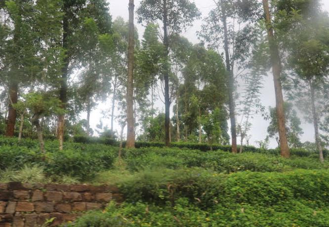 THe mountain view to Eliya Sri Lanka.