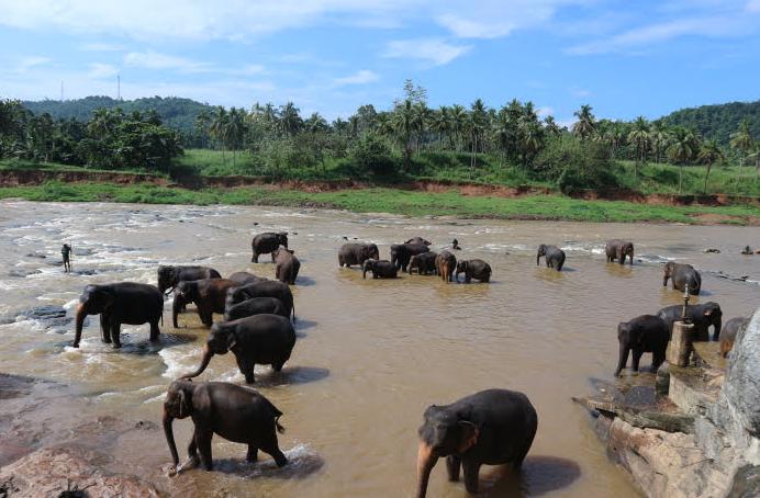 The Pinnawala Elephant orphanage Sri Lanka river.